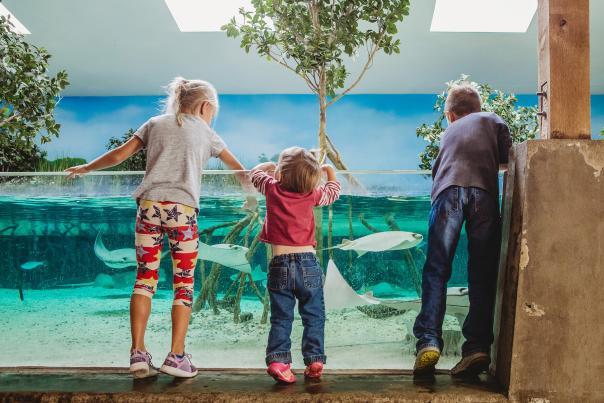 Stingray Bay at the Fort Wayne Children's Zoo