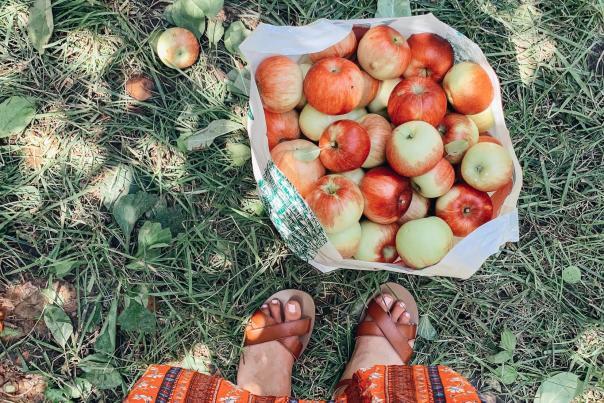 Cider Hill bag of apples