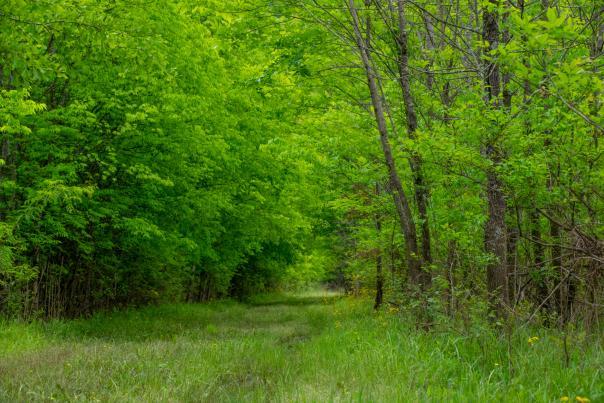 Whitaker Wildlife Preserve