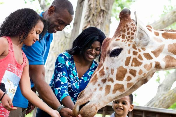 Family Time Feeding Giraffes at the Sedgwick County Zoo