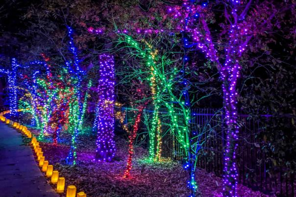 Walking Path at Botanica Illuminations 2020