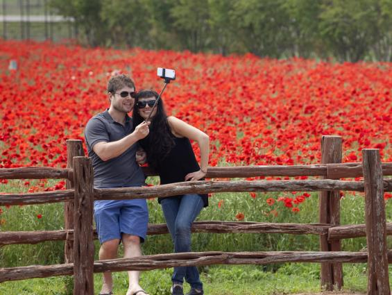Couple Takes  a Selfie in front of flower field at Wildseed Farms in Fredericksburg