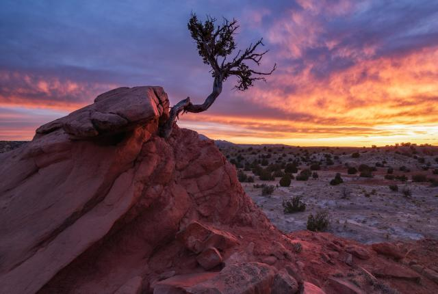The Secret Tree, Photograph by Jake Werth, New Mexico Magazine