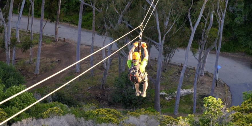 Person going down the zip line over the trees on Catalina Island