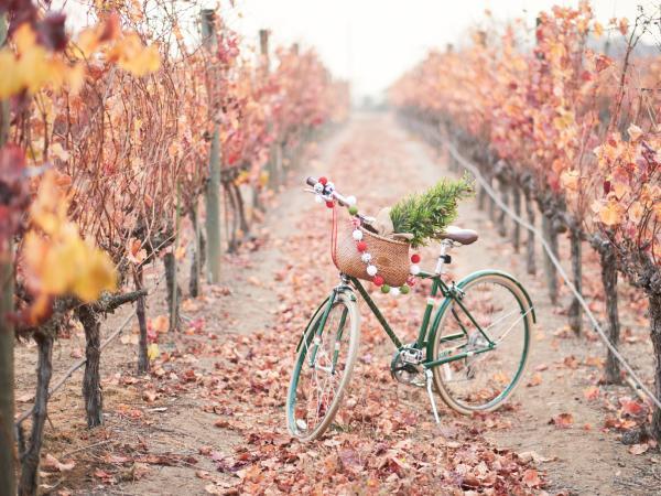 Christmas in a Napa Valley vineyard