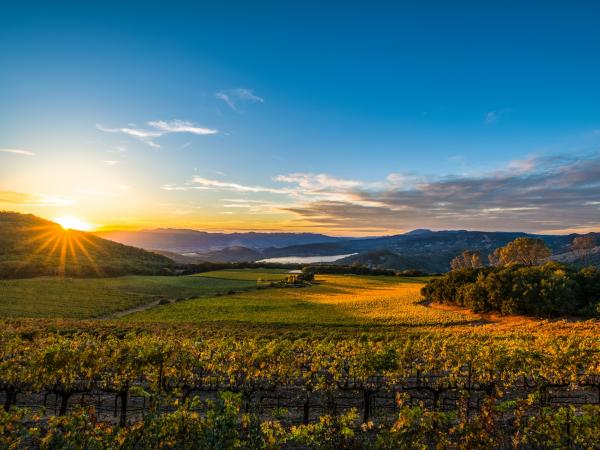 Napa Valley in Fall at Sunset