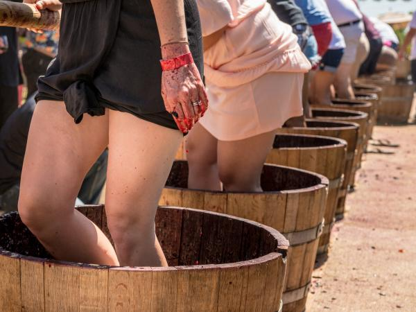Grape Stomping Buckets