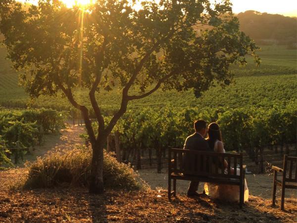 Wedding couple in a Napa Valley vineyard