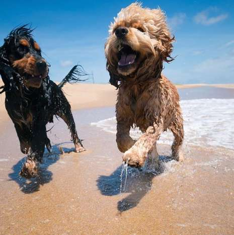 dogs summer