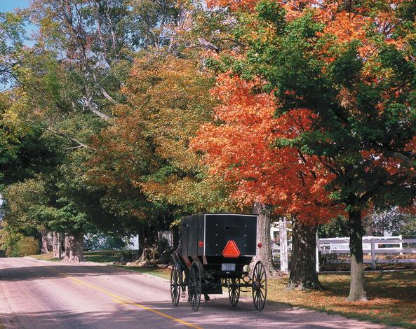 Amish Buggy Fall