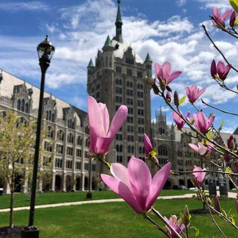 Spring in Albany