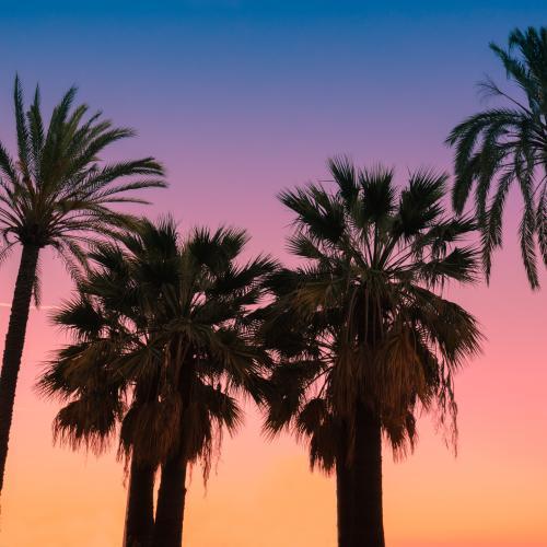 Palm Trees & Sunset