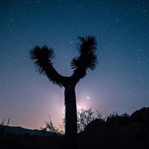 Night sky behind Joshua Tree silhouette in Joshua Tree National Park
