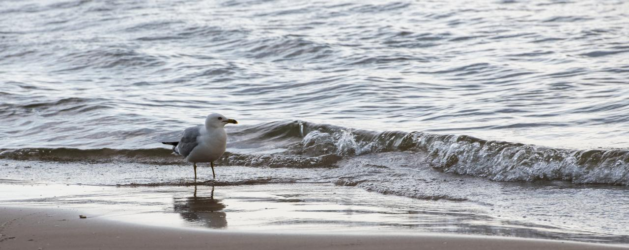 Seagull in front of the ocean at Southwick Beach State Park on Lake Ontario