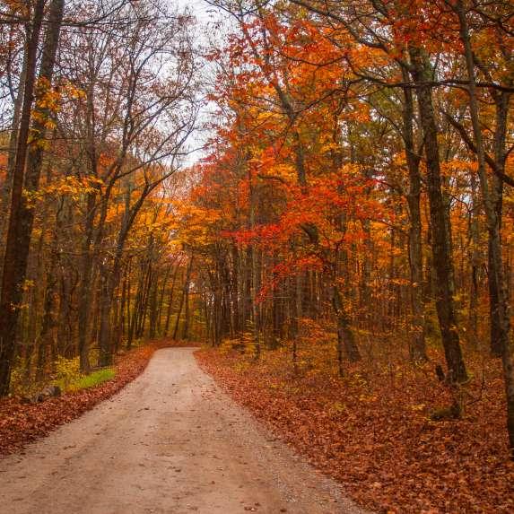 Hoosier National Road in Fall