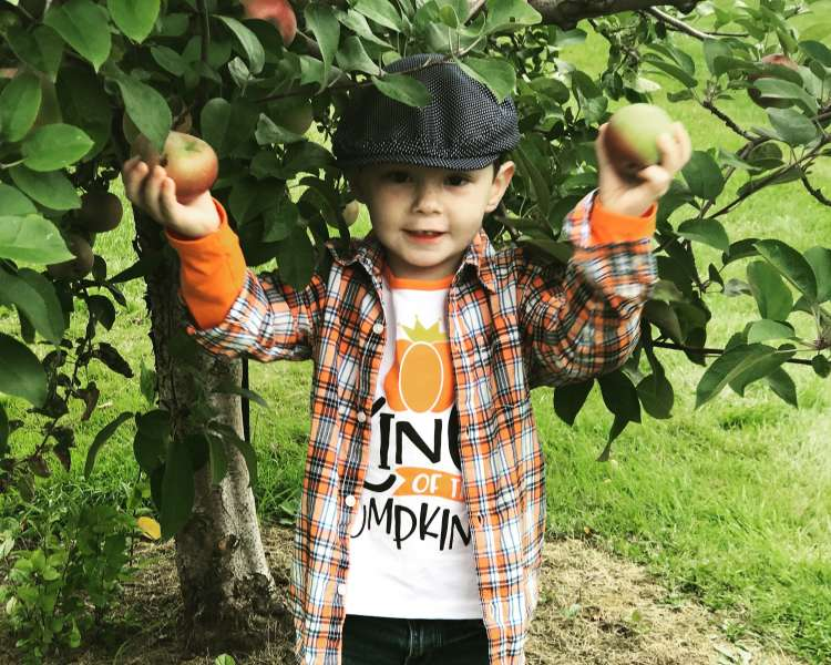 Young boy apple picking.
