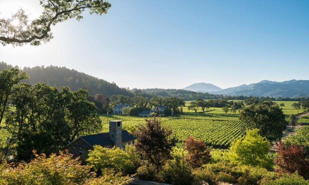 St Helena vineyard and winery