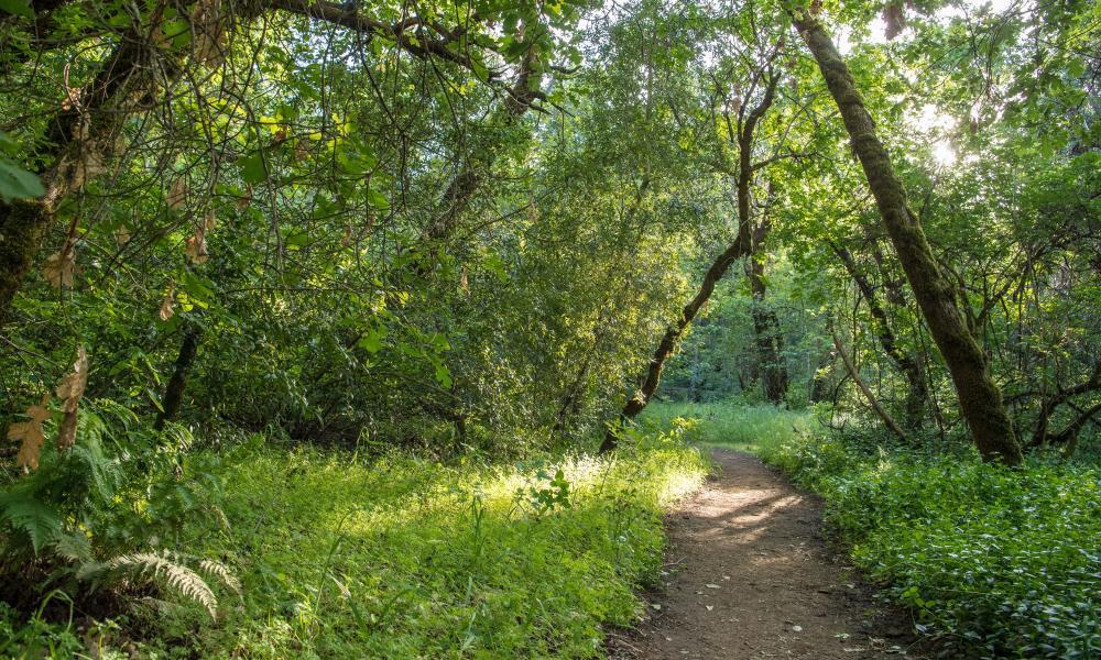 Napa Valley Outdoor Hike