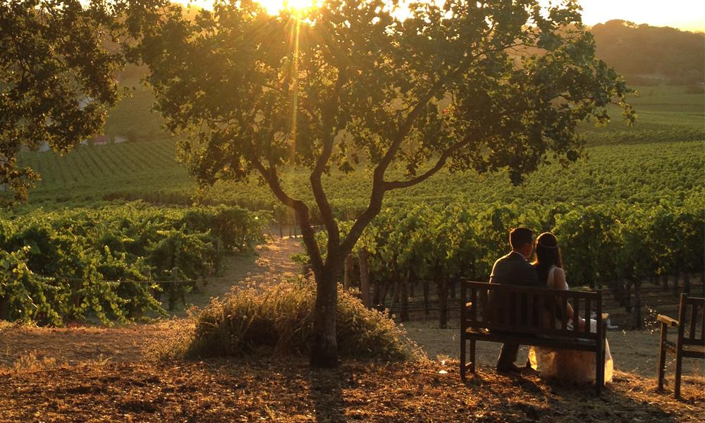 Wedding couple in a Napa Valley vineyard