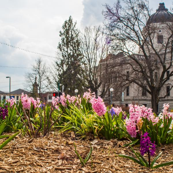 Courthouse Square Spring