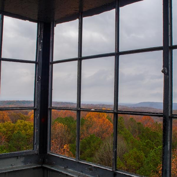 View out the windows at the Hickory Ridge Fire Tower