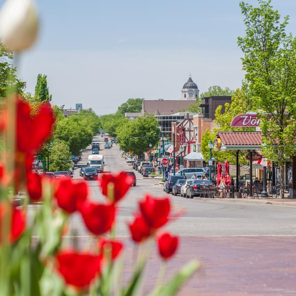 Tulips & Kirkwood Street View In Bloomington