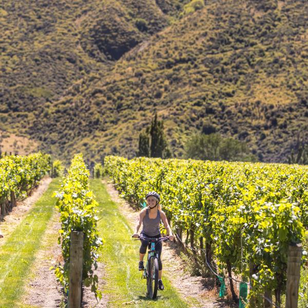 Biking through the vines in Gibbston