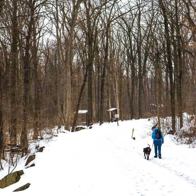 A person and their dog walking along a snowy trail through the winter forest