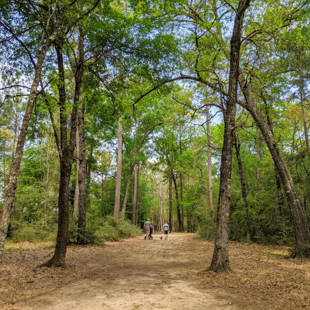 Walking in The Woodlands