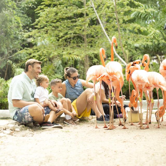 Chetumal Zoo