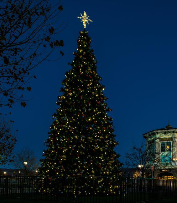 Christmas tree in Napa