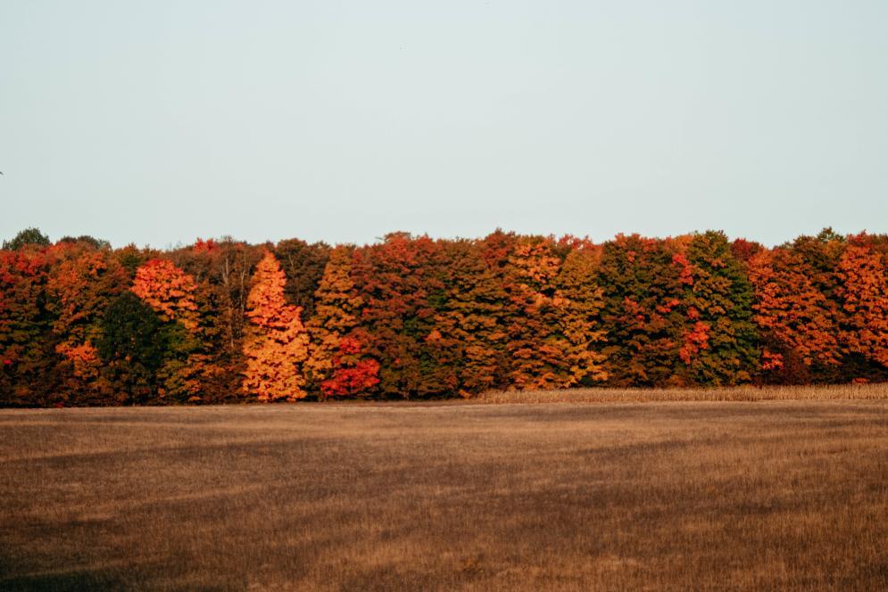 Fall Colors - Treeline
