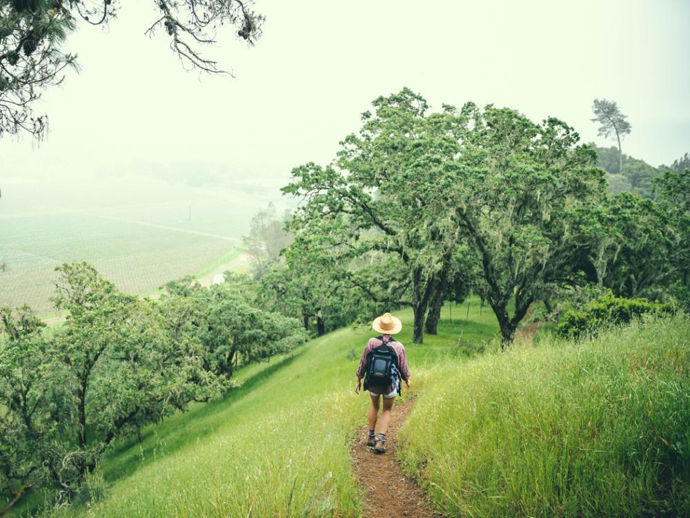 Hiking in Calistoga