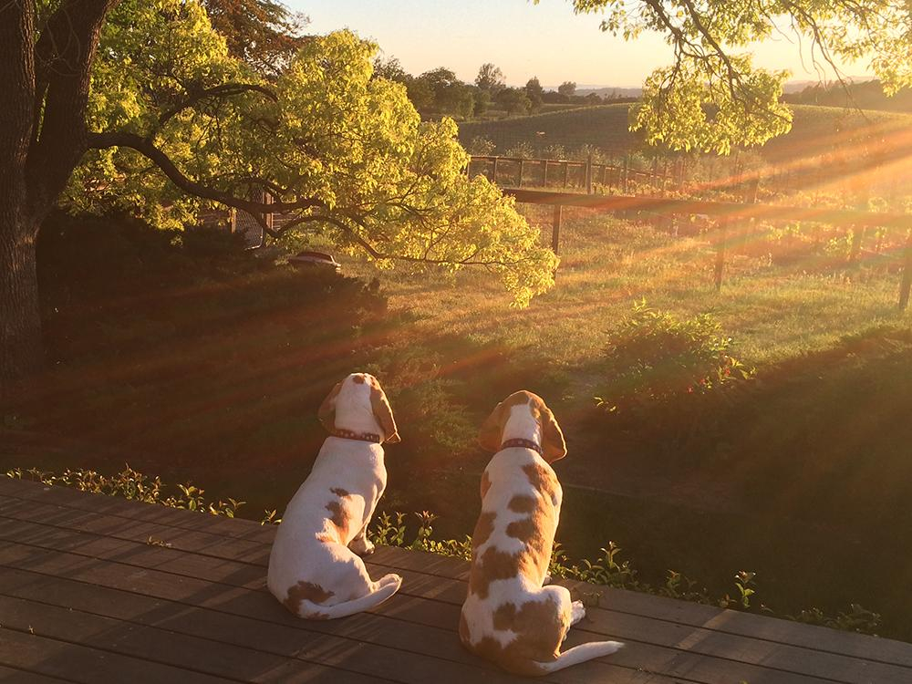 Napa Valley Woofers- Pet Friendly Wineries