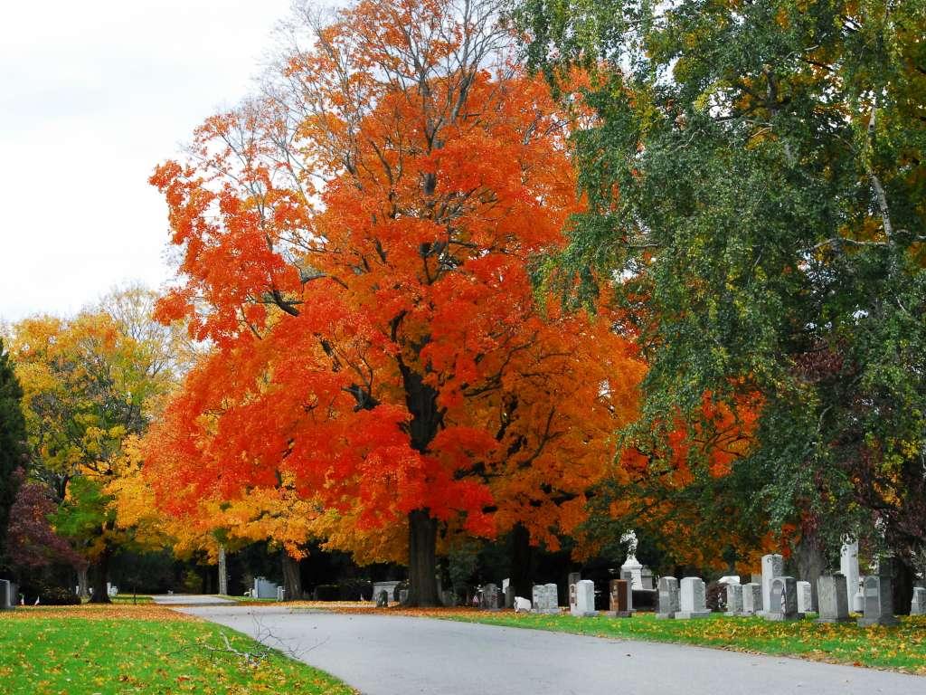 Flaming orange tree behind gravestones at Swan Point Cemetery in Providence.