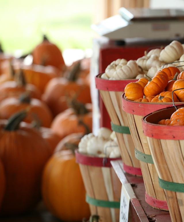 Little orange and white pumpkins in baskets at Vogel Orchard in Fredericksburg TX