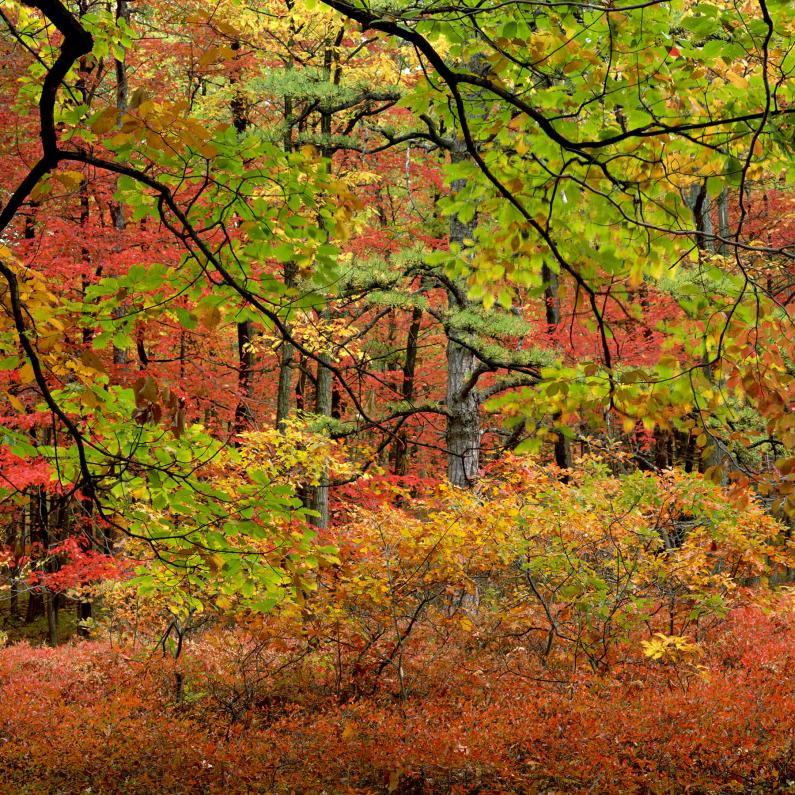 Vibrant red, orange, yellow and green trees at Kings Gap in the Fall
