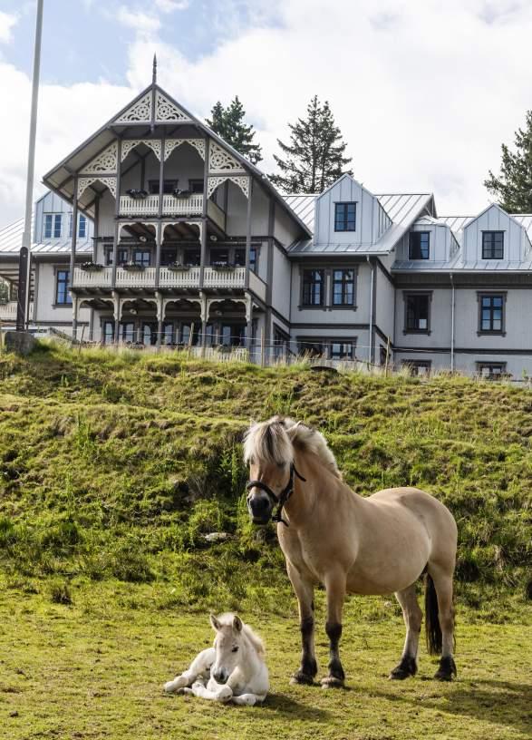 Hest og føll foran gårdshotellet - Eikerapen Gjestegard - Eikerapen i Åseral