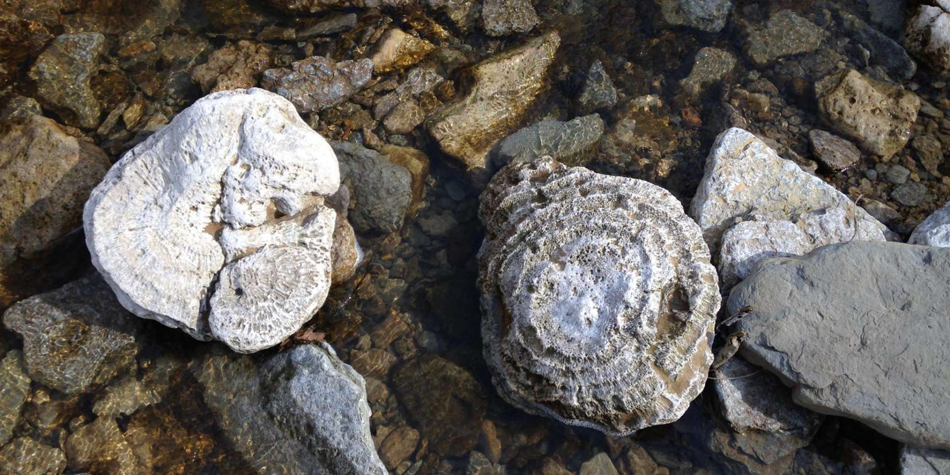 Fossils and rocks in shallow water at Clifty Falls State Park