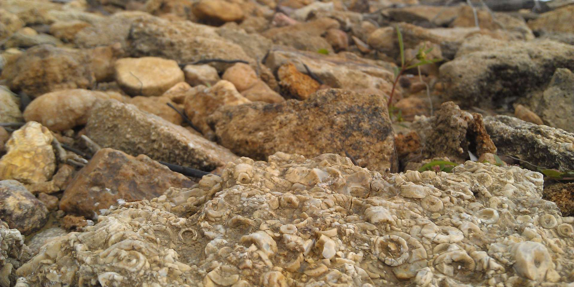 Fossils and rocks at Monroe Lake State Park