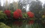 New garden tour experience at the Dandenong Ranges Botanic Gardens
