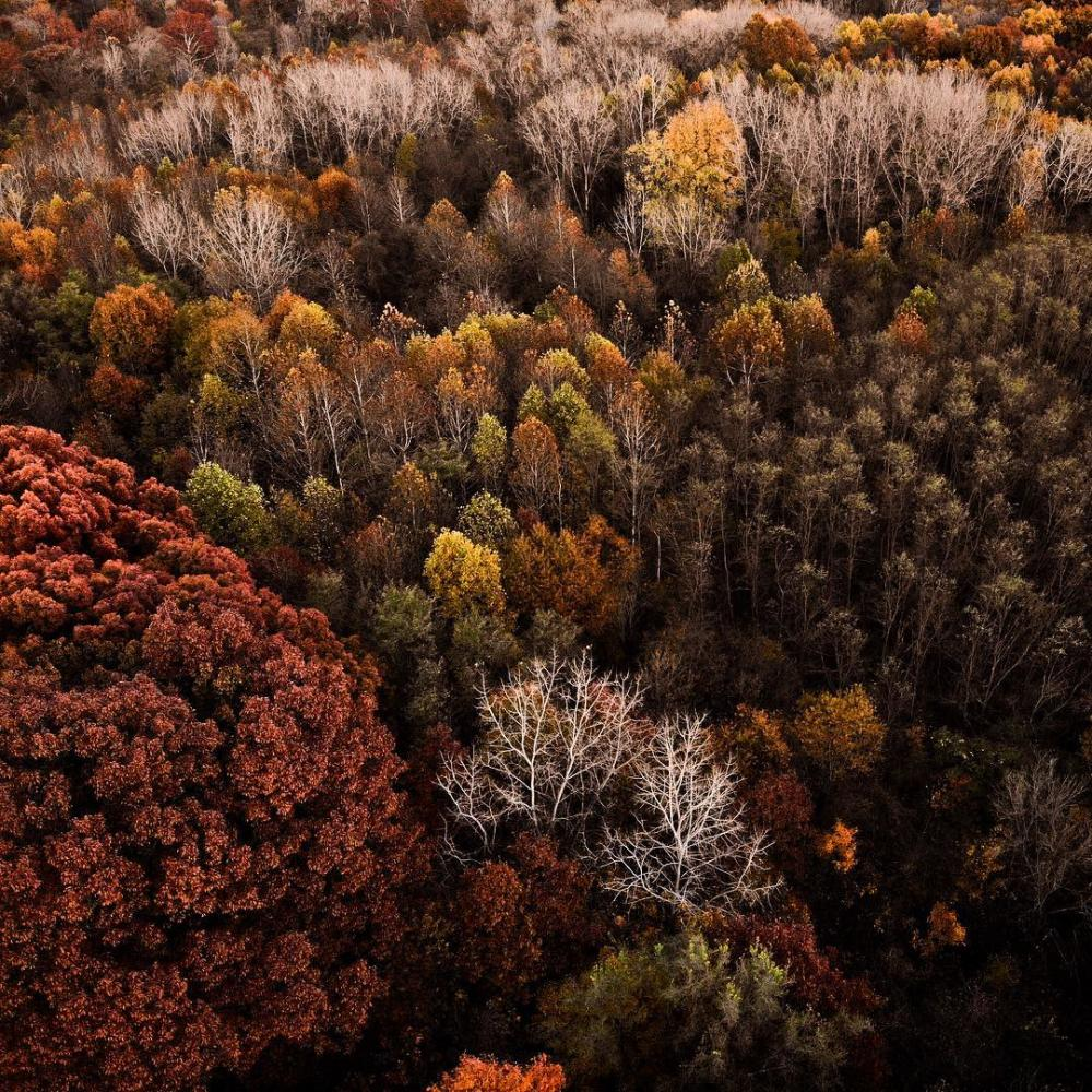 Aerial view of fall trees at Metea County Park in Fort Wayne