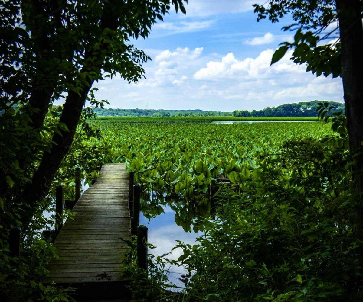 Wooden boardwalks wind along the marsh in Jug Bay