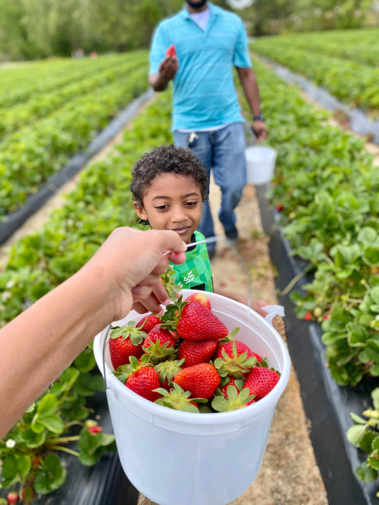 A hand holds a full bucket of strawberries up to the camera