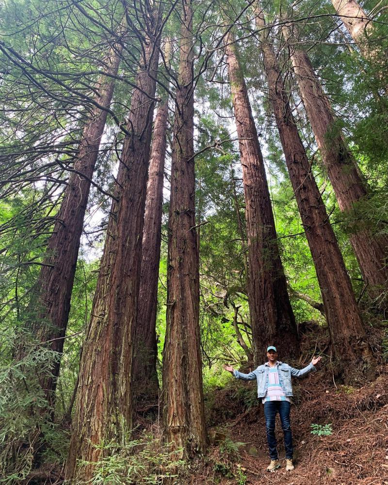 Hiker in the Redwoods Photo