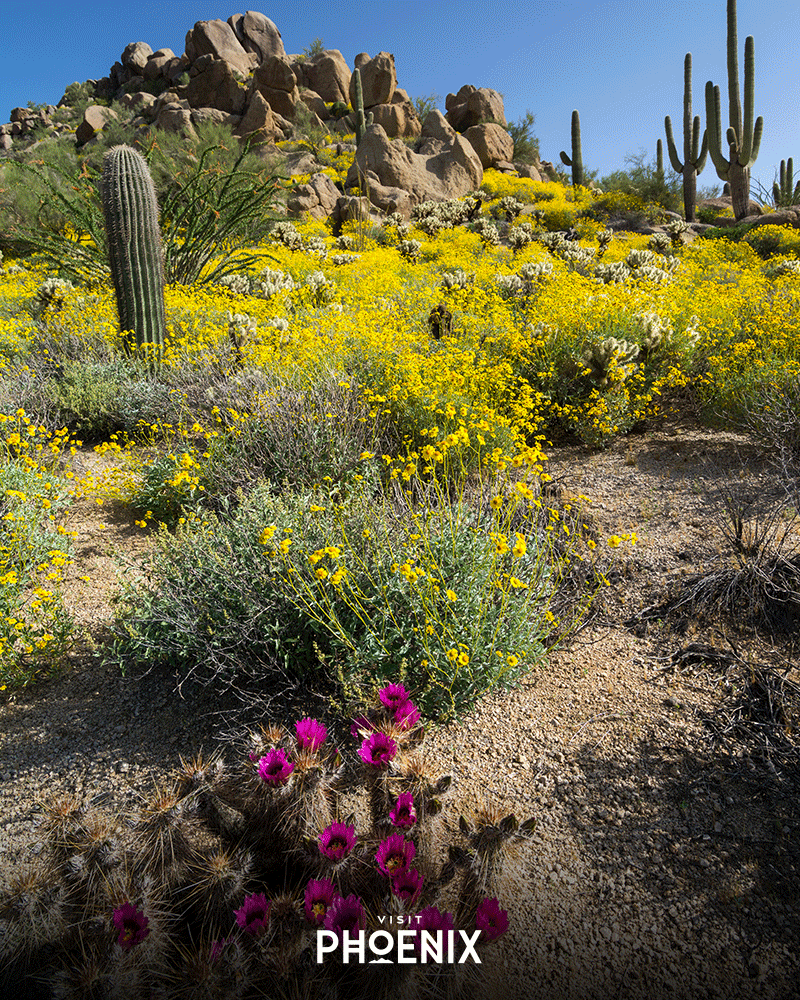 Flowers blooming in the desert