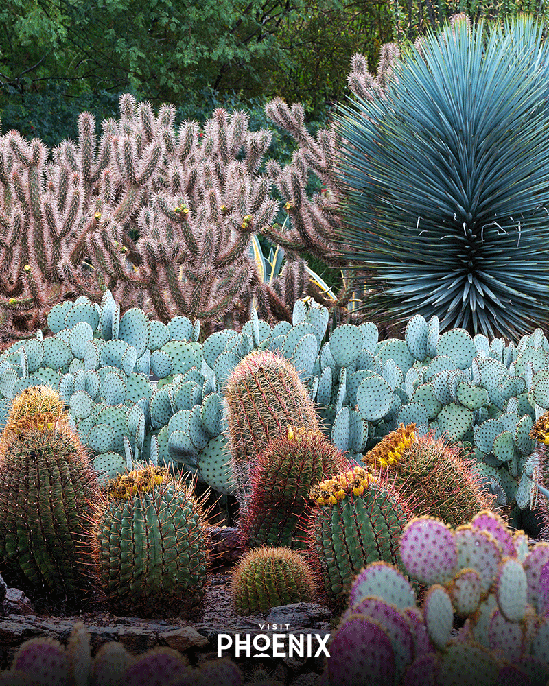 Various cactus at the Desert Botanical Garden