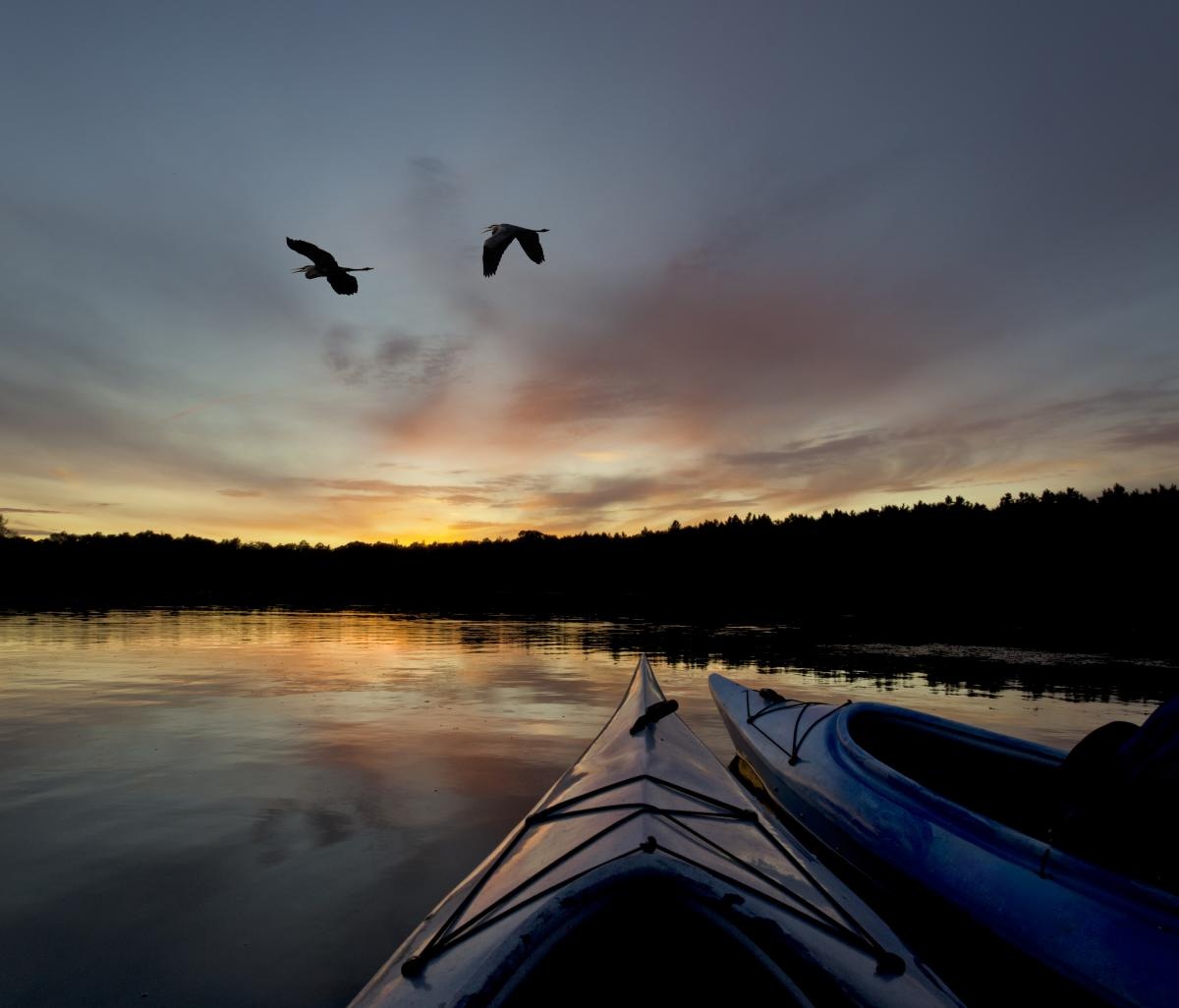 kayaking on the river with 2 birds flying overhead at sunset