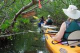 Kayak group going through Wolverton Blueway trail