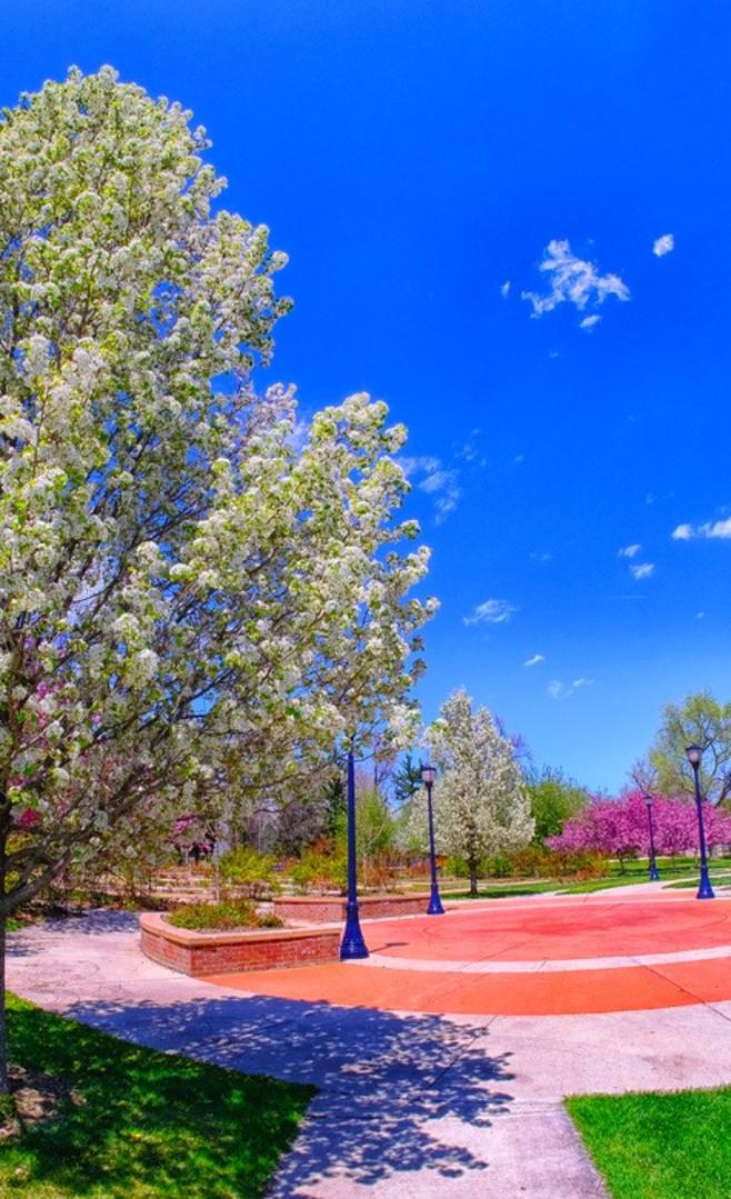 Roosevelt Park-Steve Solomon